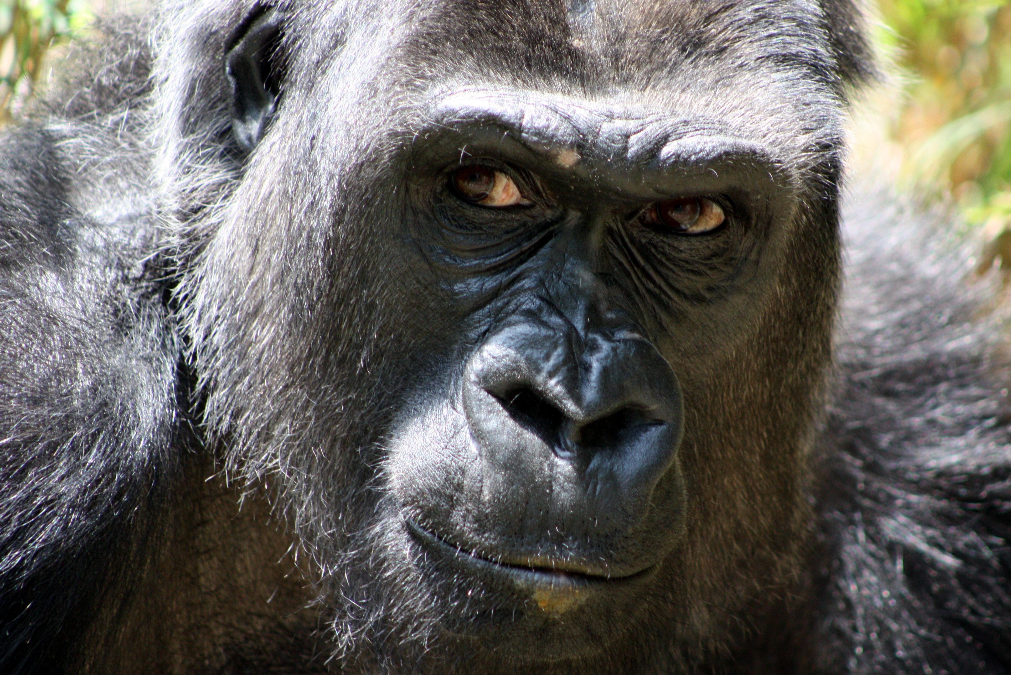 Il gorilla invisibile: mappe di salienza e controllo dell'attenzione