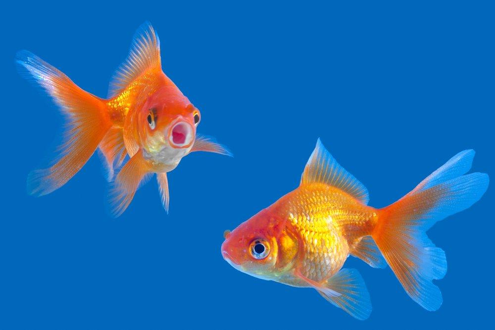 Non valutare il pesce da come si arrampica sugli alberi