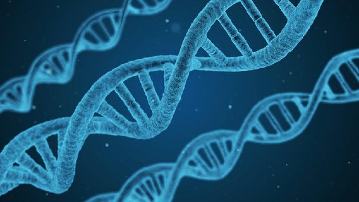 Epigenetica, premessa scientifica al Metodo Autobiografico Creativo