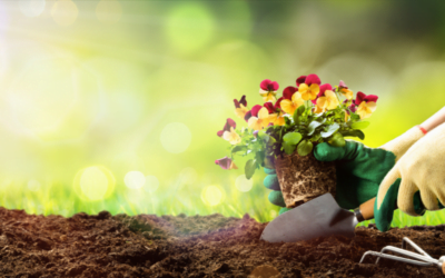 L'insegnante e la metafora del giardiniere